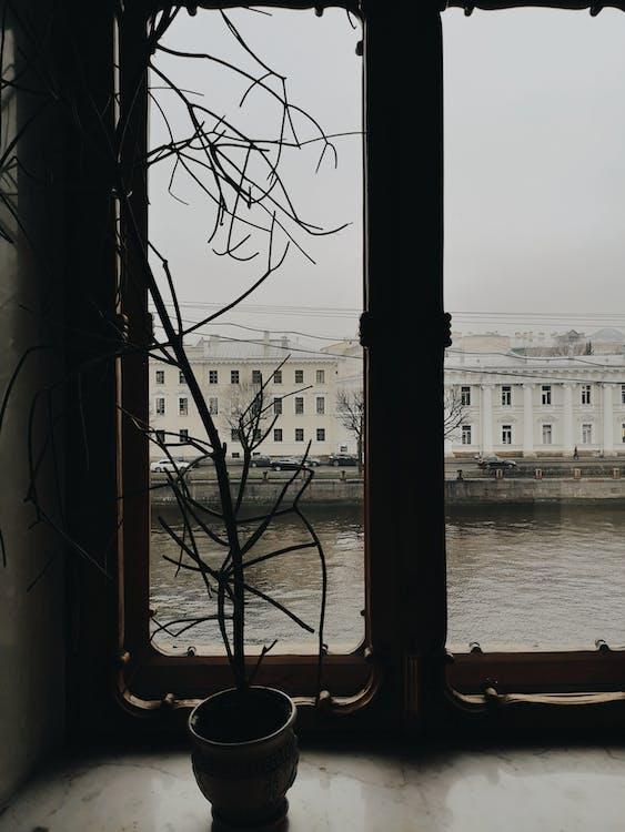 俄國, 堤, 植物的