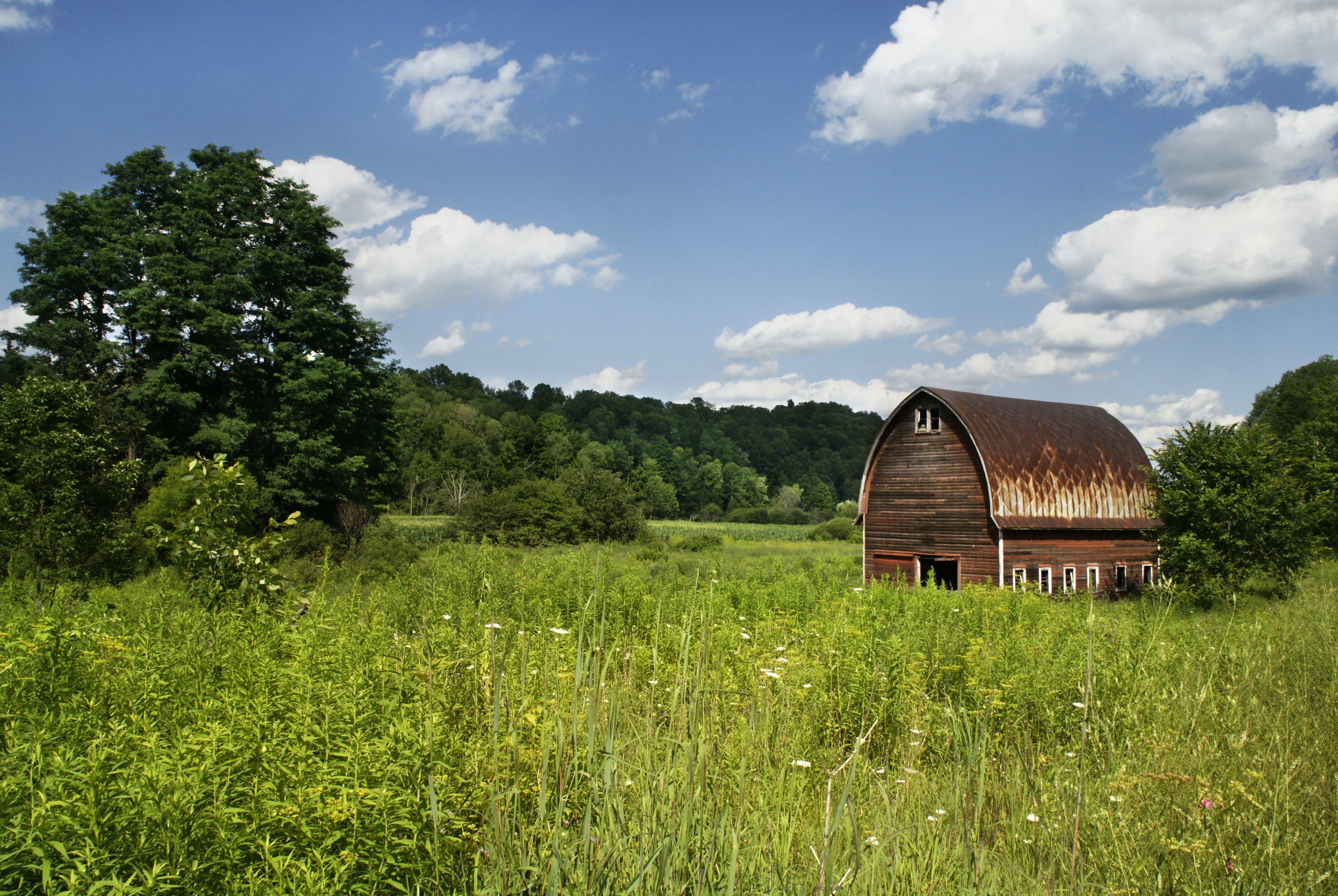 Brown Barn Surrounded by Green Grass