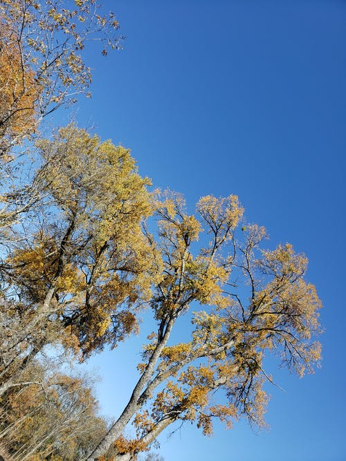 Free stock photo of autum, blue sky, nature, sky