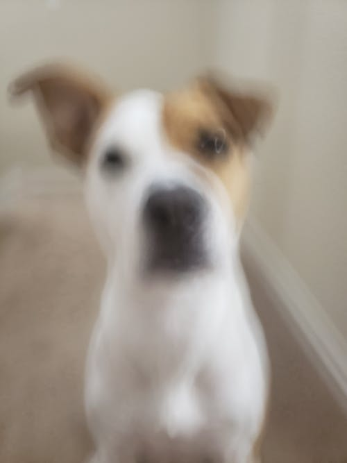 Free stock photo of blurr, blurry, dog, dogs