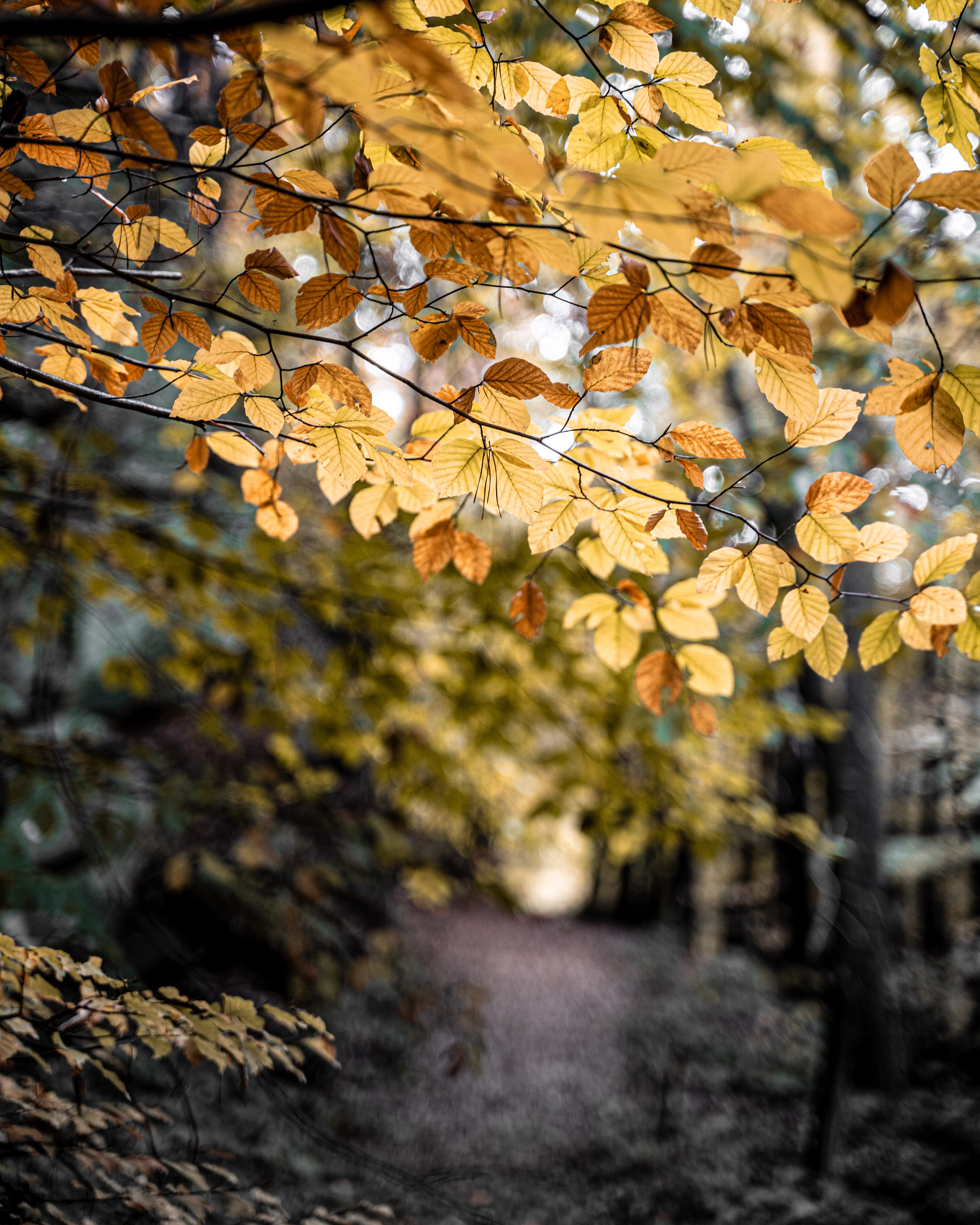Yellow Leaves on Tree Branch