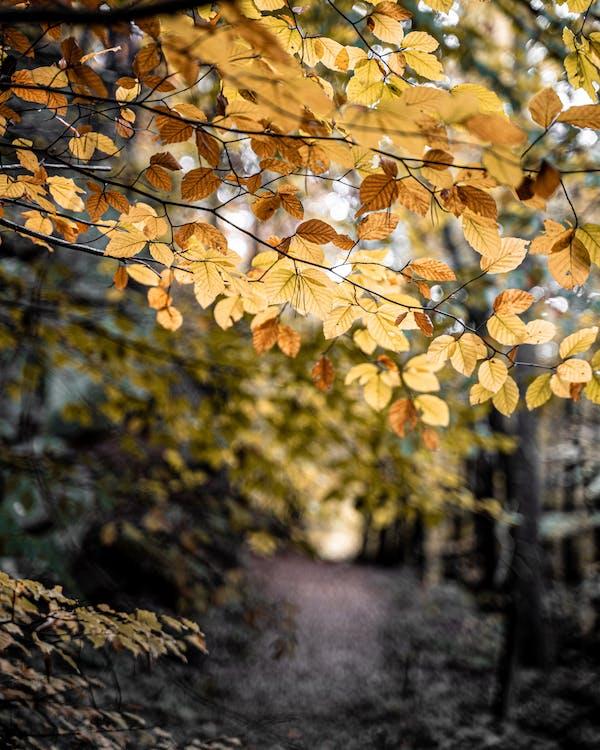 arbre, automne, branche