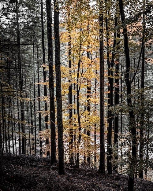 Fotos de stock gratuitas de afuera, al aire libre, arboles, bosque