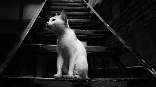 Free stock photo of animal, animal photography, bw photography
