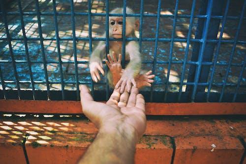 Free stock photo of animal photography, baby monkey, travel photography