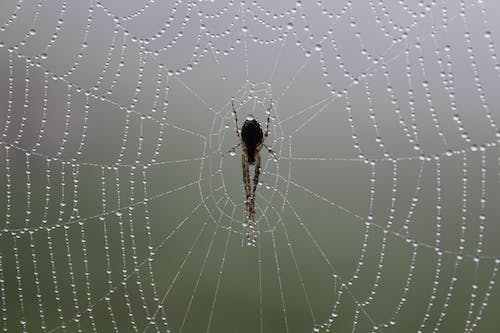 Free stock photo of fog, spider, spider web, web