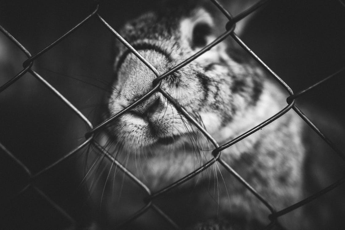 Grayscale Photo of a Rabbit on a Cage