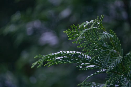 คลังภาพถ่ายฟรี ของ การถ่ายภาพมาโคร, ต้นไม้, น้ำแข็ง, พร่ามัว