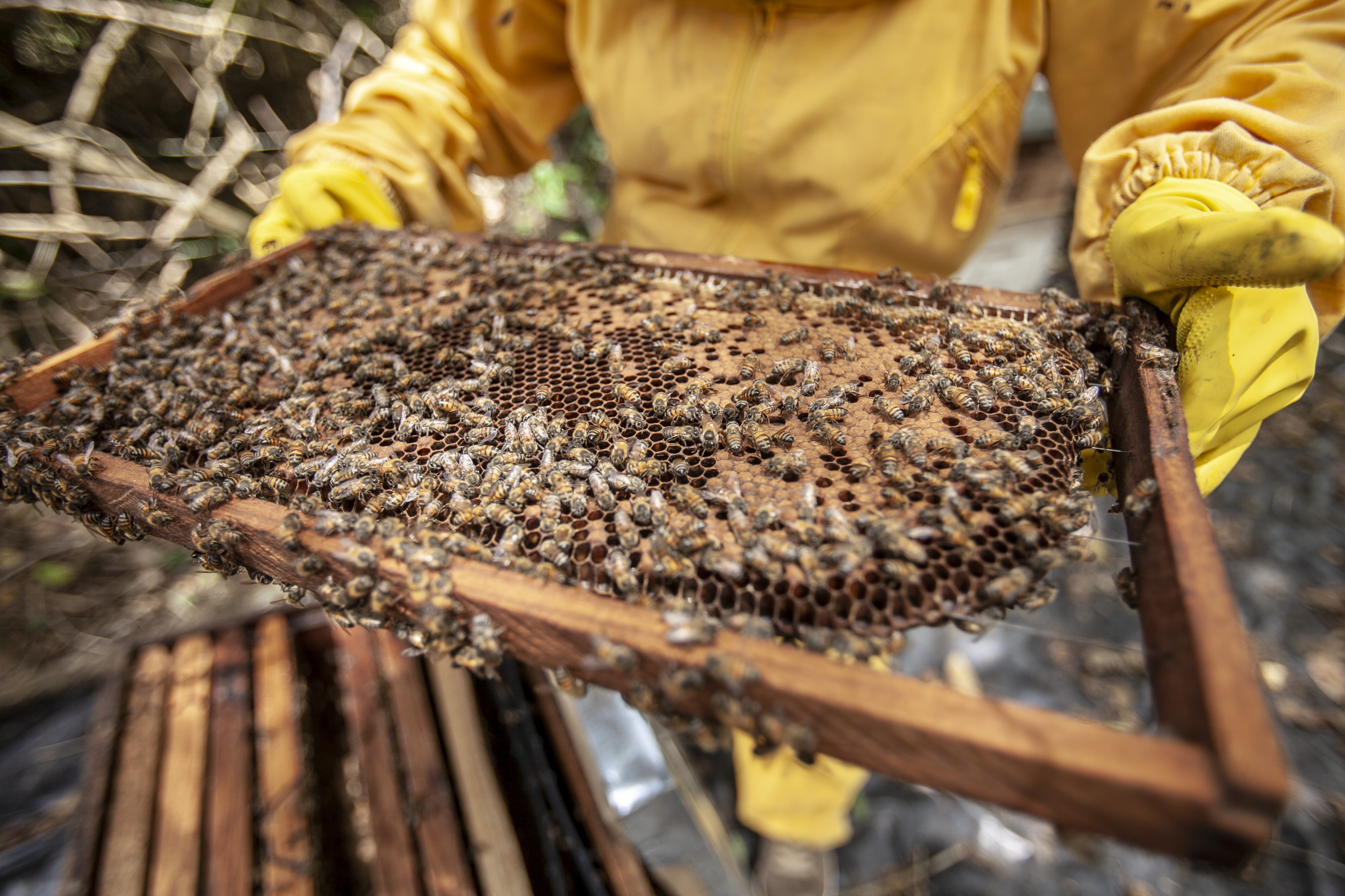 Close Up Photo of Bees
