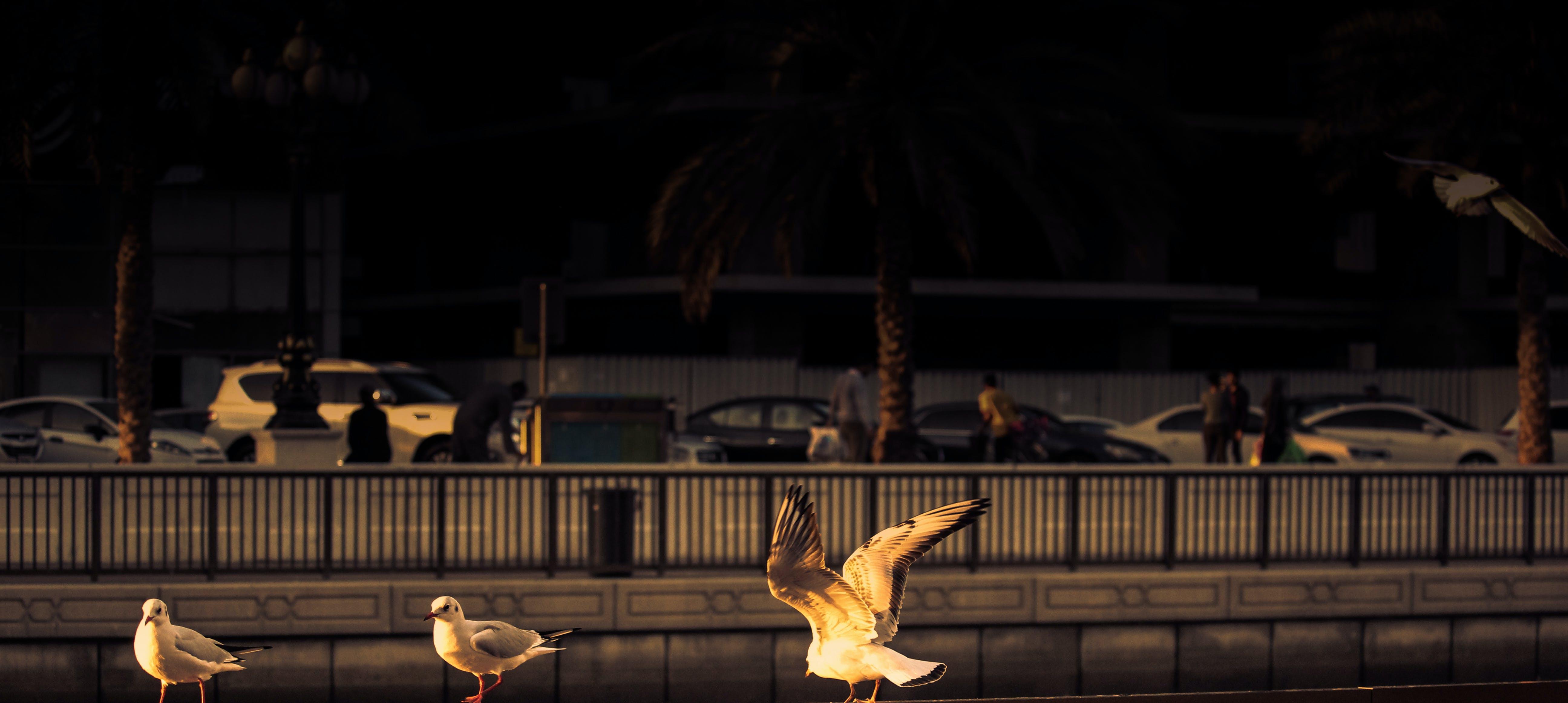 Free stock photo of dubai, flying, Lowlight, sunset