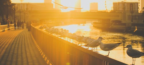 Free stock photo of dubai, orange, seagull, seagulls