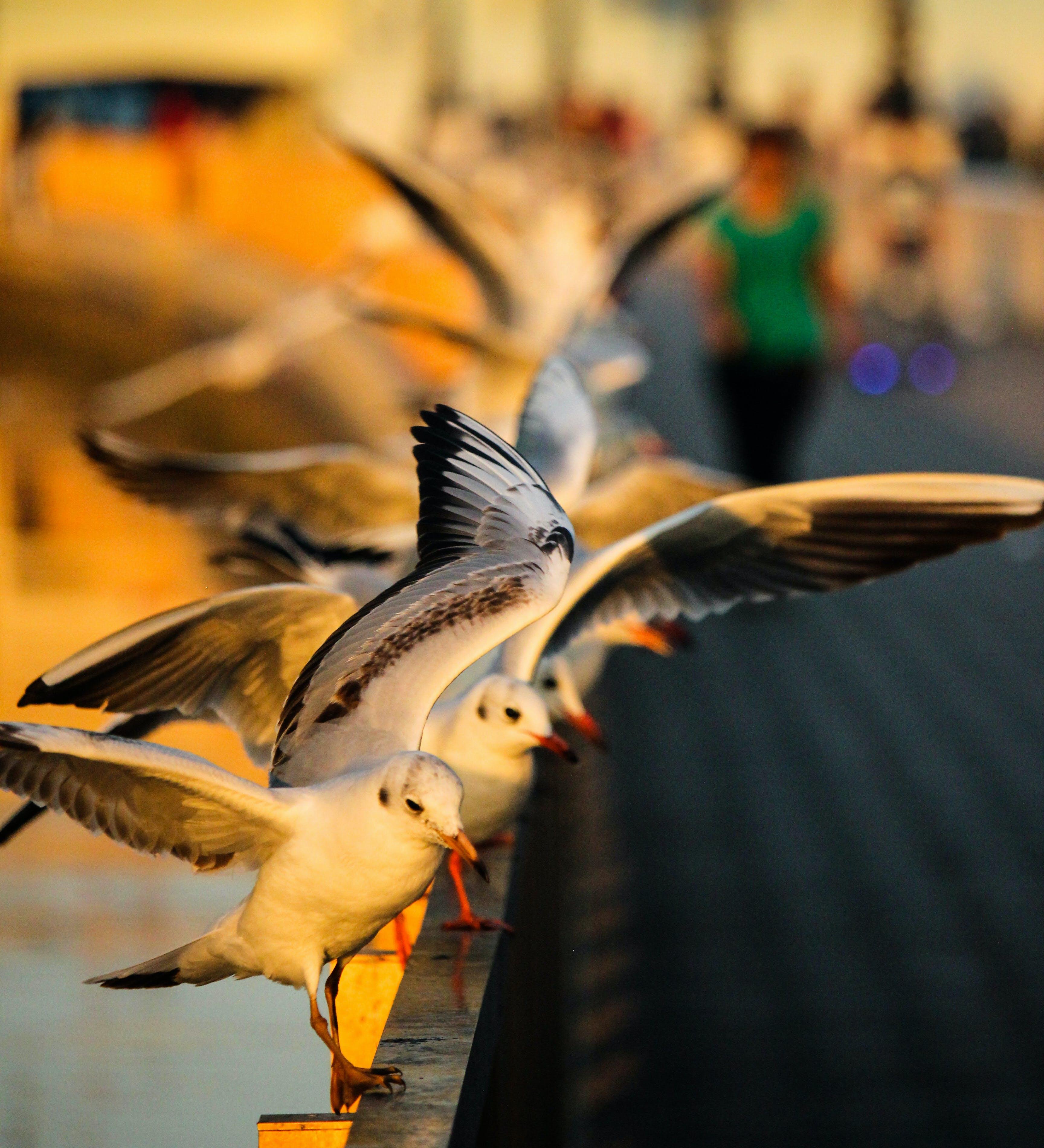 Free stock photo of action, dubai, flying, pigeon