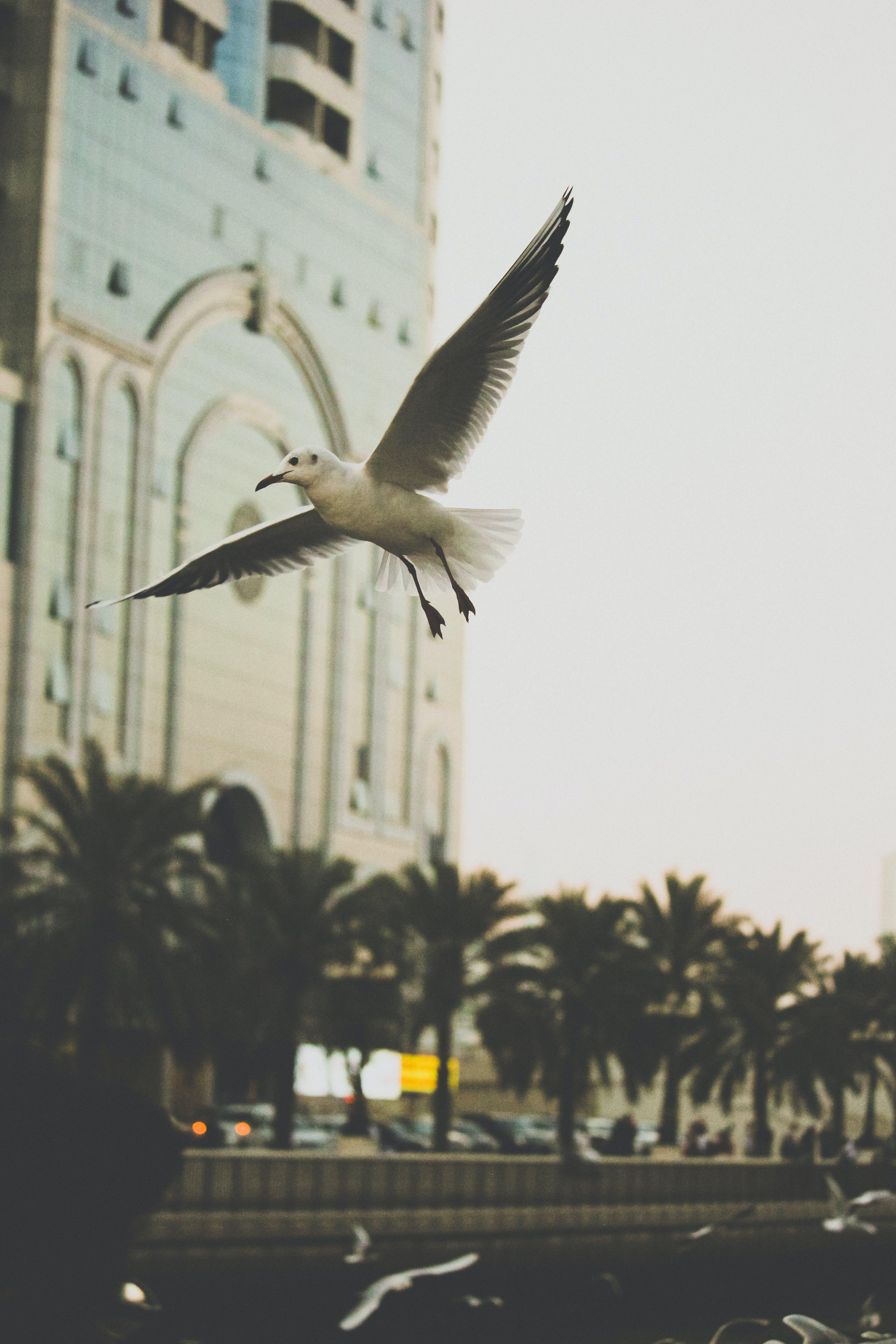 Free stock photo of action, dubai, flying, freedom
