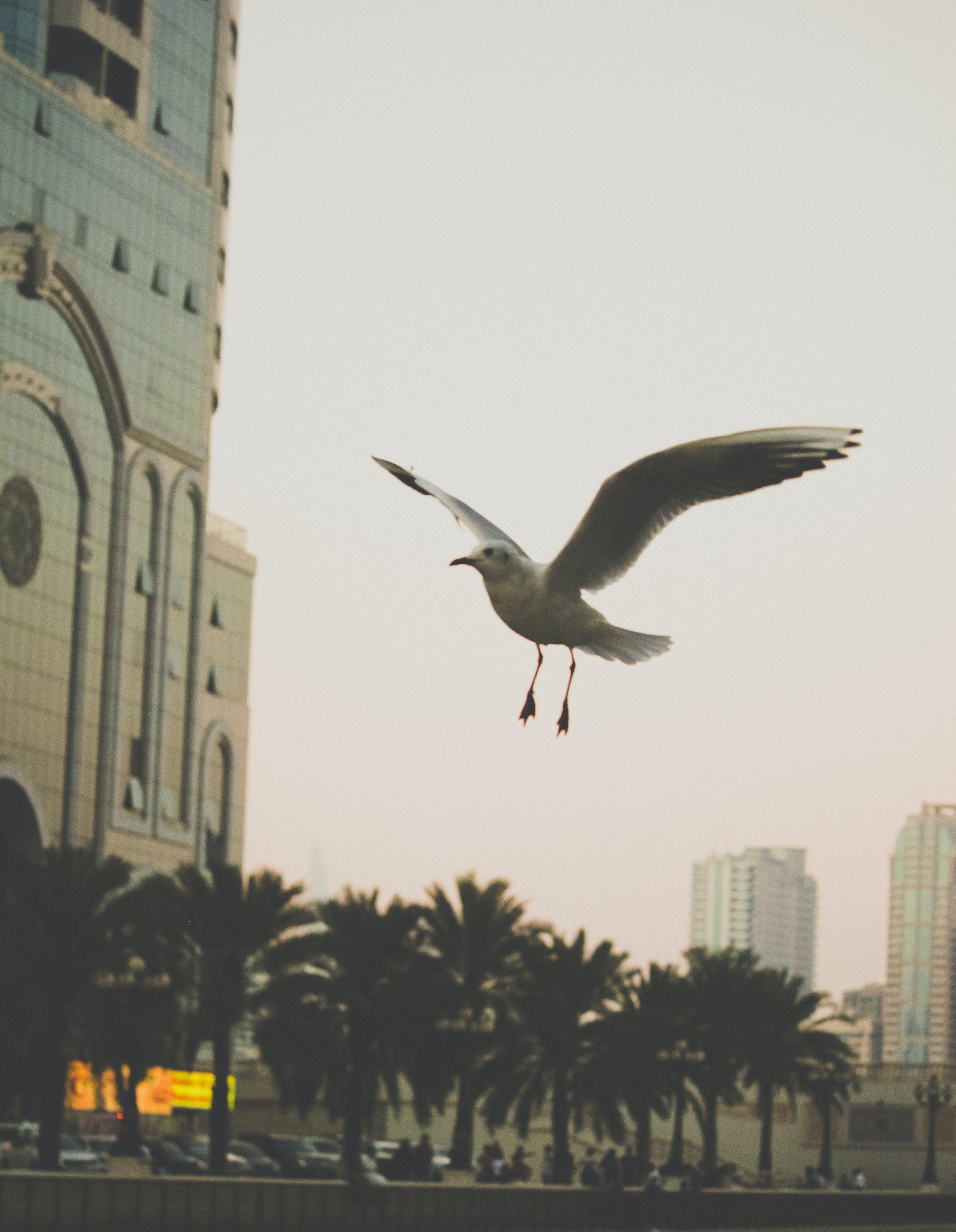 Free stock photo of dubai, flyings, freedom, seagull