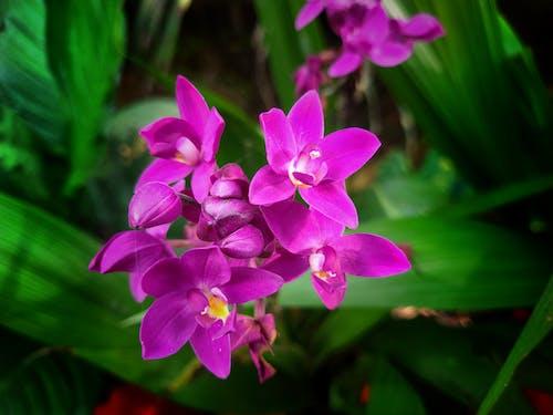 Immagine gratuita di bellezza nella natura, fiori bellissimi, natura, sfondo verde