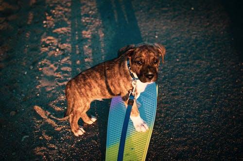 Gratis stockfoto met babyhondje, beest, cent bord, hond