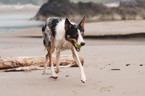Photo of Dog Walking on Beach