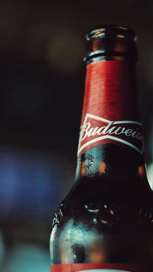 Fotos de stock gratuitas de botella de alcohol, botella de cerveza, budweiser, cerveza