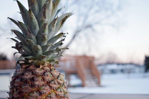 Ingyenes stockfotó ananász, hó, kontraszt témában