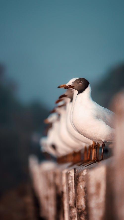 Fotos de stock gratuitas de 50 mm, 8kwallpaper, Adobe Photoshop, clic