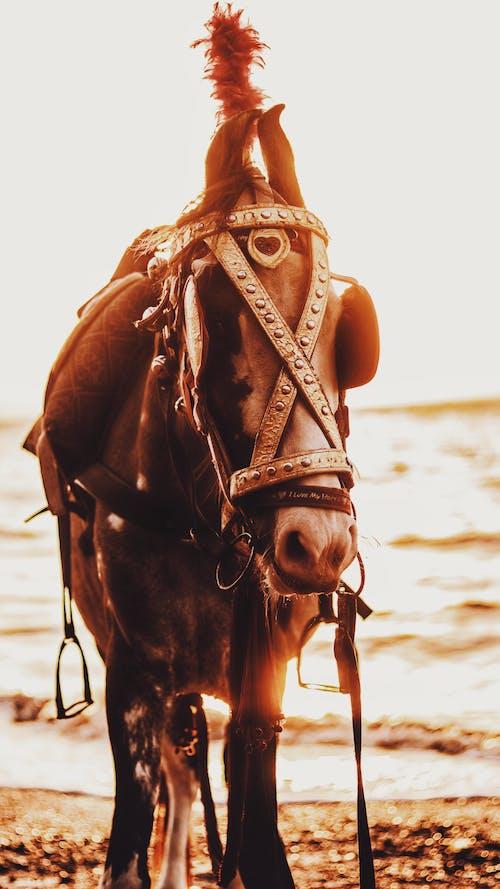 Fotos de stock gratuitas de caballo, caballo negro, cine, cinematografía