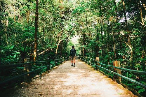 Immagine gratuita di foresta, gede pangrango national park, indonesia, magico