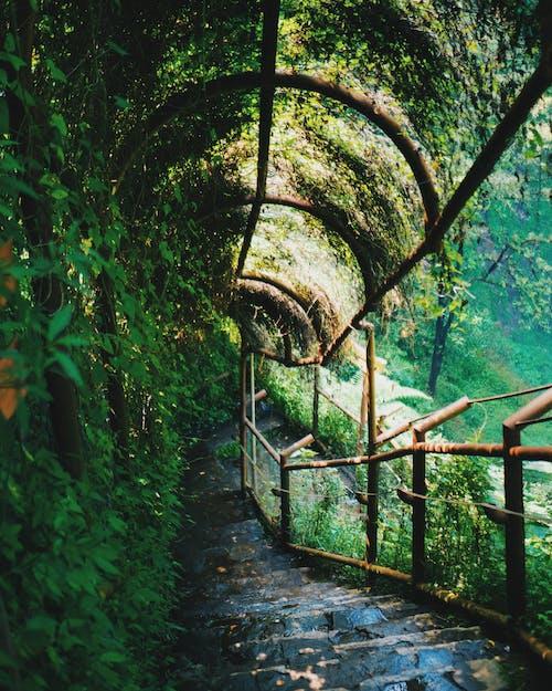 Immagine gratuita di cascata, scala, scale, scuro