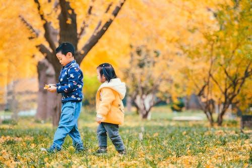 Základová fotografie zdarma na téma ', 公园, 北京, 季节