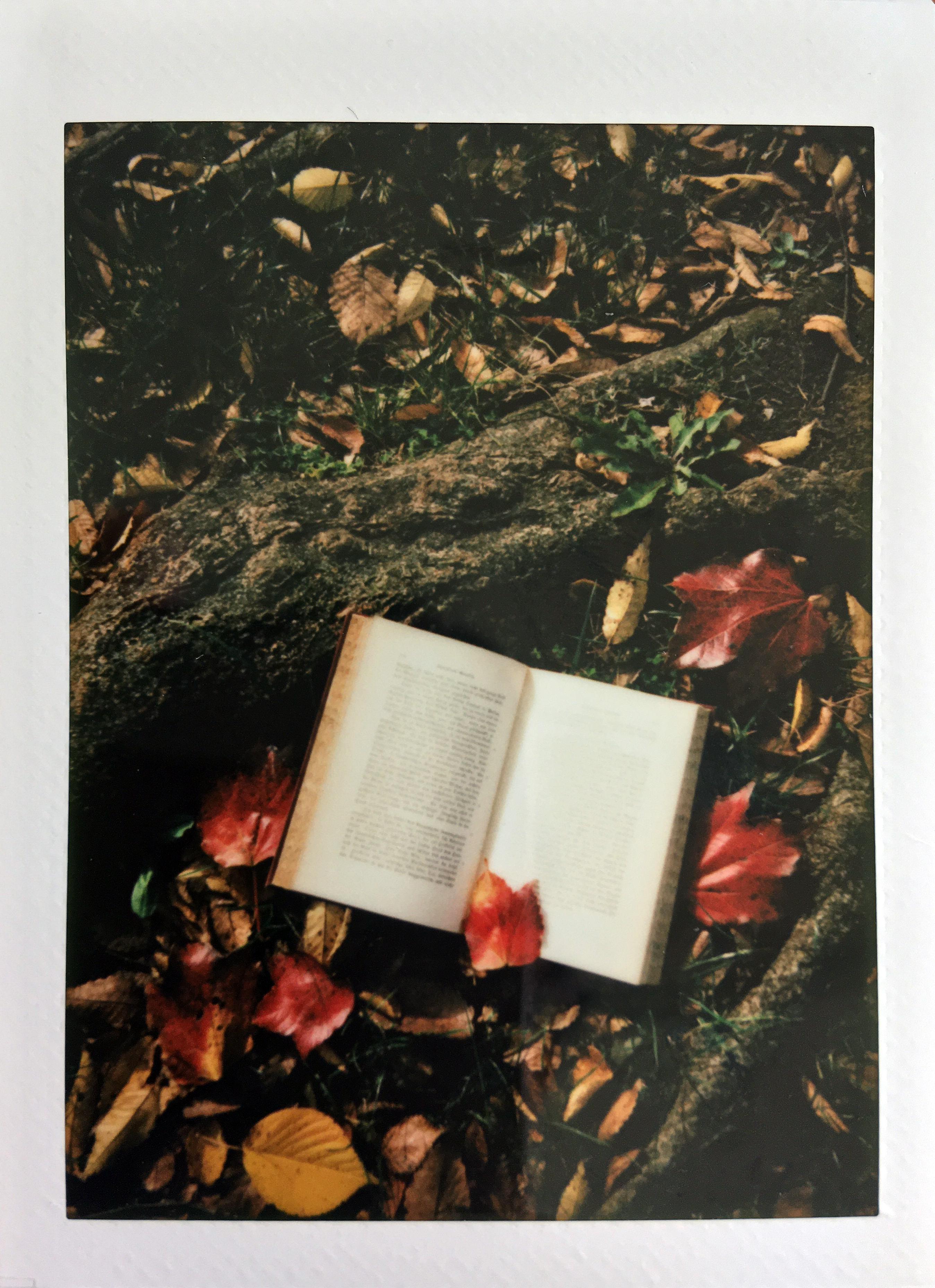 Photo of Opened Book Near Dry Leaves