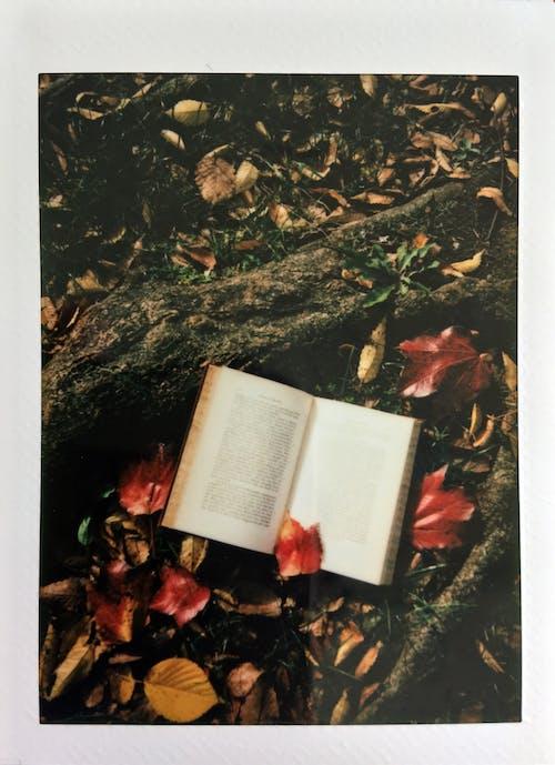 Безкоштовне стокове фото на тему «Polaroid, висушене листя, відкритий, книга»