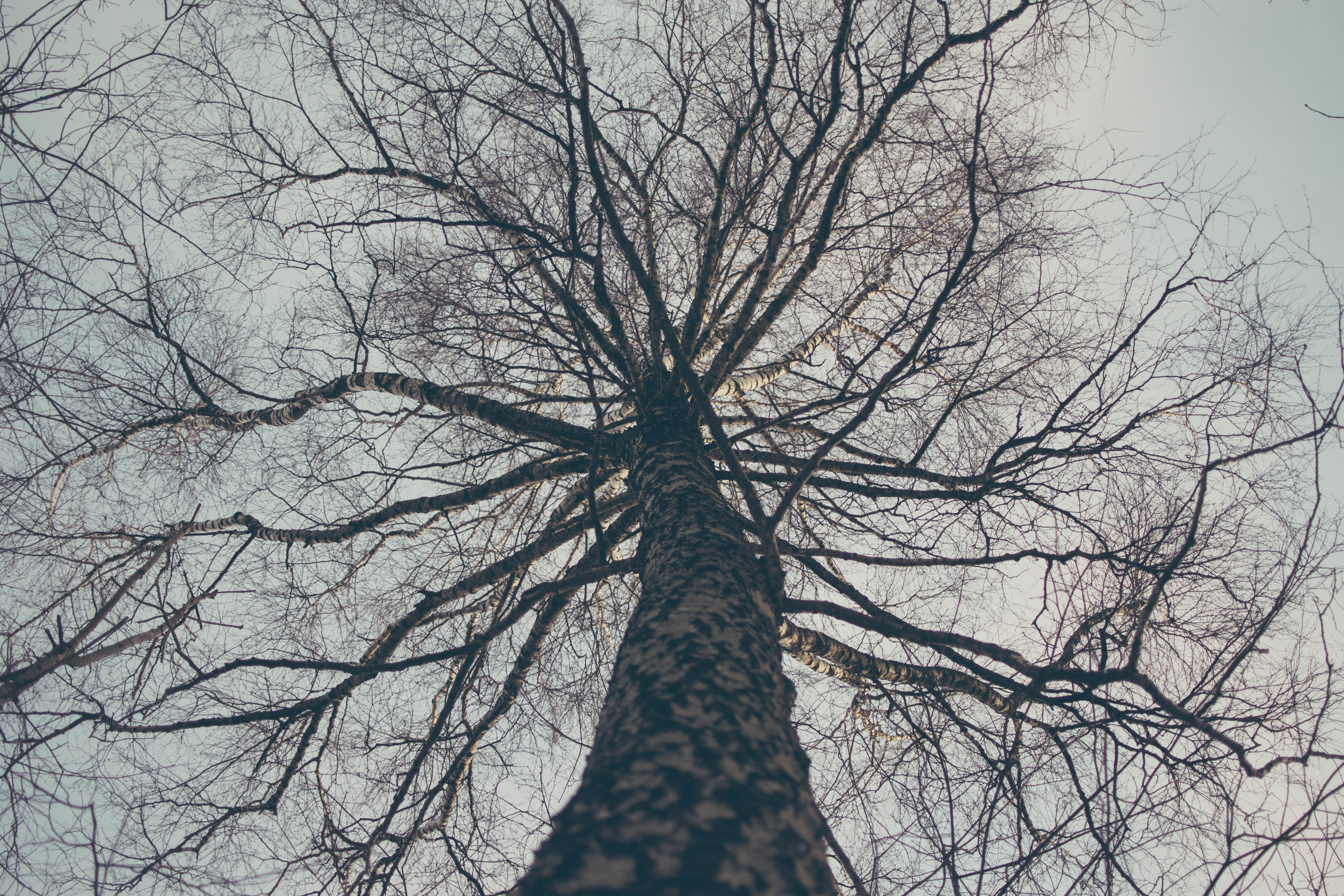 Low Angle View of Bare Tree Against Sky