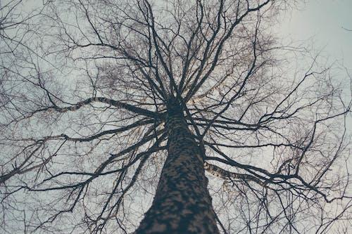 低角度拍攝, 分支機構, 原本, 天性 的 免费素材照片