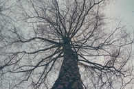 wood, dawn, nature