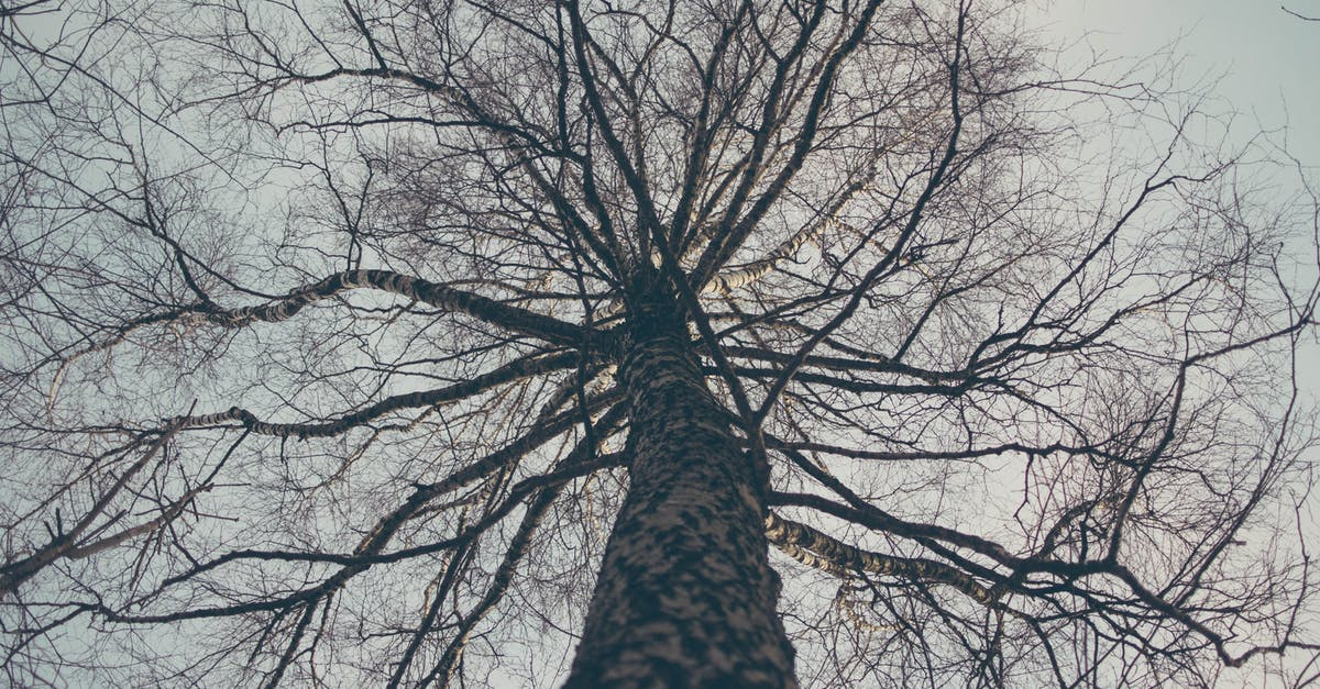 Low Angle View of Bare Tree Against Sky · Free Stock Photo
