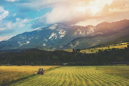 Fotos de stock gratuitas de agricultura, Barcelona, campo, campos de cultivo
