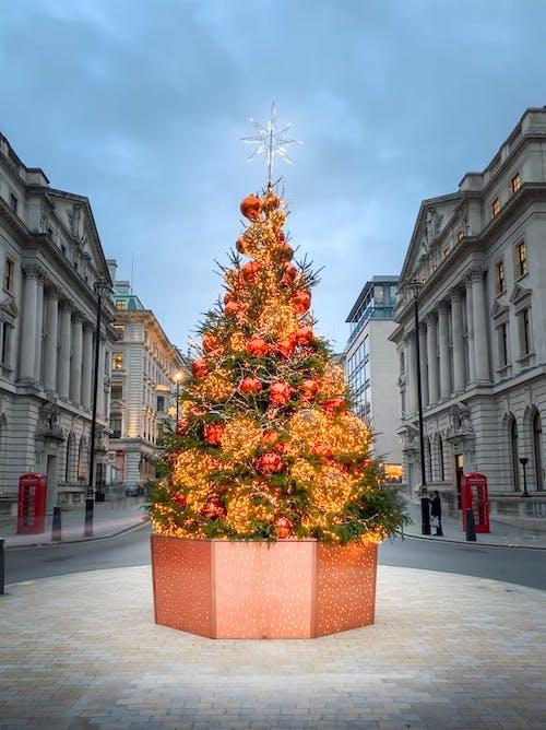 Foto profissional grátis de árvore, cidade, edifícios, Londres