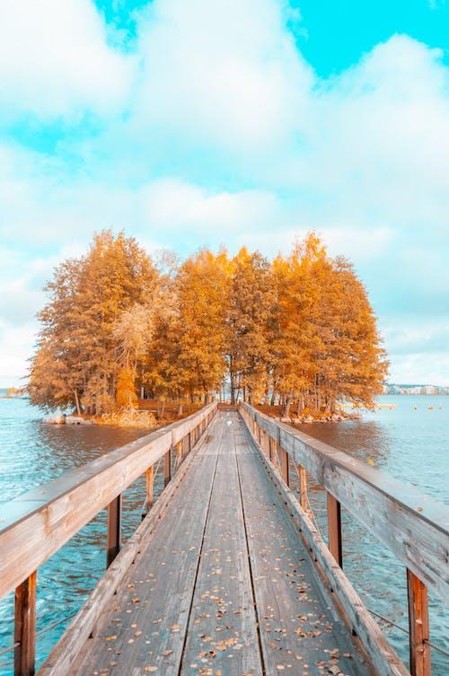 Foto profissional grátis de amarelo, azul, céu, declínio