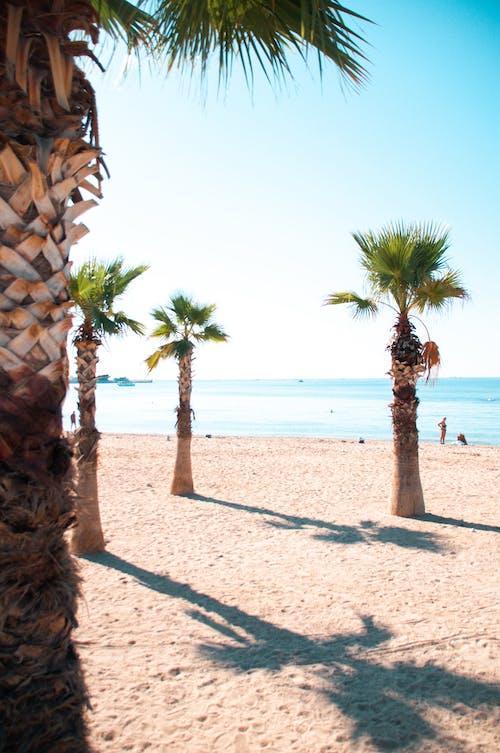 Foto profissional grátis de ao ar livre, areia, arenoso, árvores