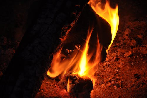 Free stock photo of burning wood, camp fire, fire