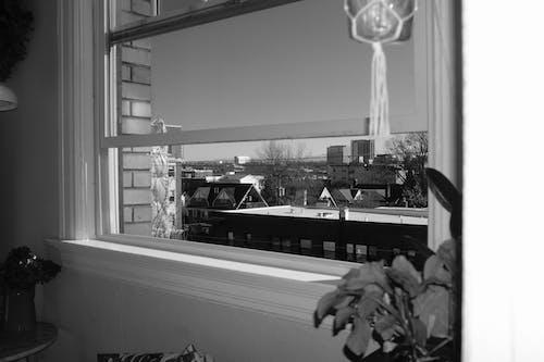 Free stock photo of autumn, black and white, home, Portland