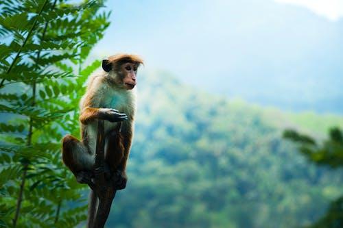 Foto d'estoc gratuïta de animal, arbre, assegut, bufó