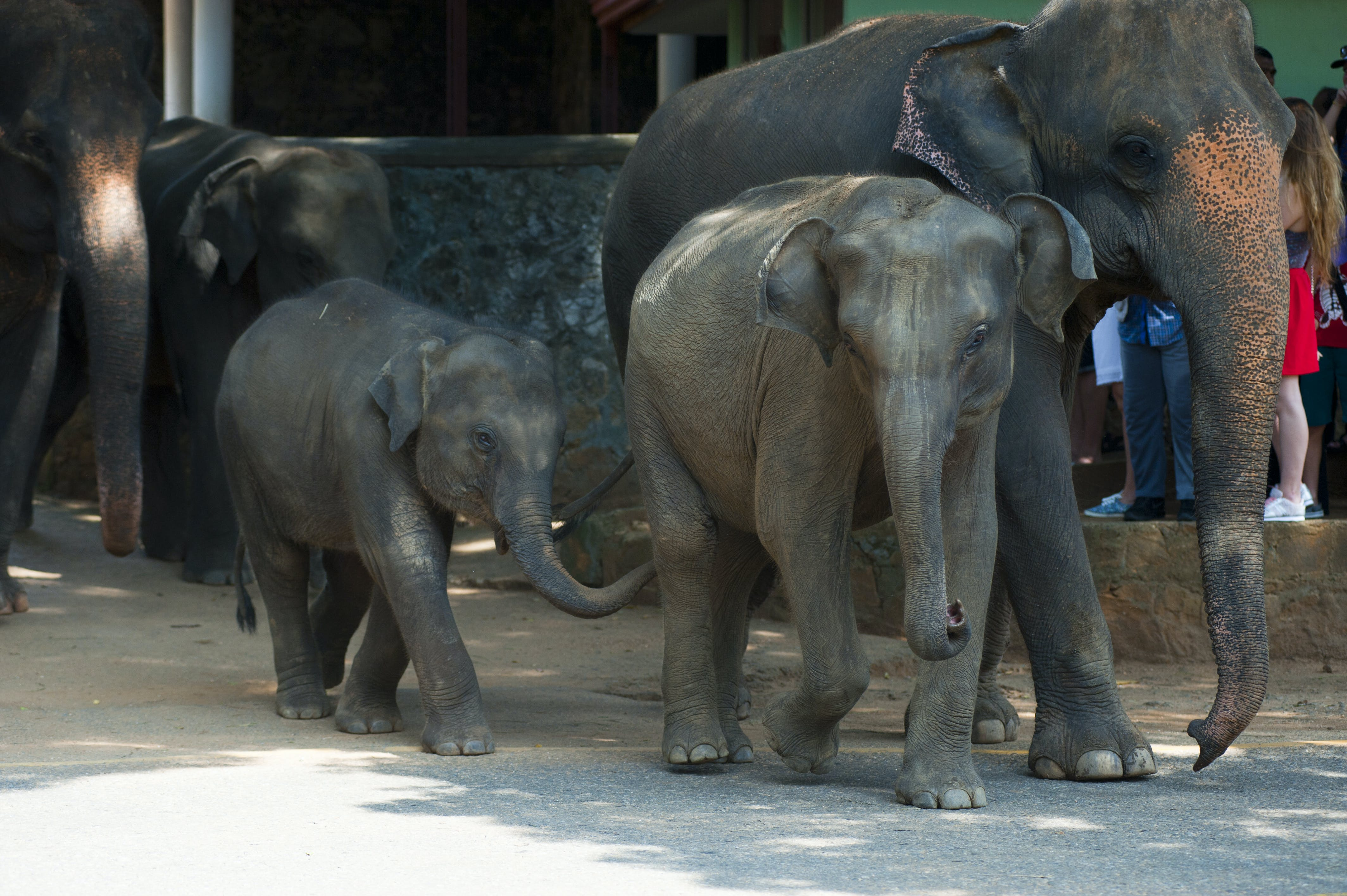animal, elephant, elephants