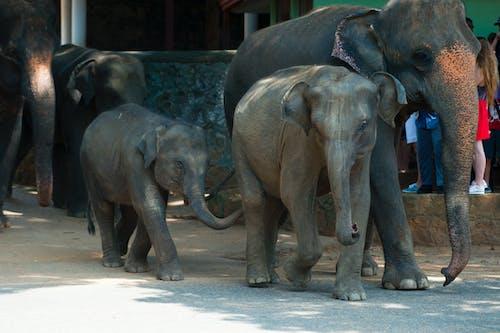 Безкоштовне стокове фото на тему «великий, дика природа, дика тварина, зоопарк»