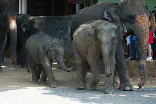 Free stock photo of animal, zoo, large, safari