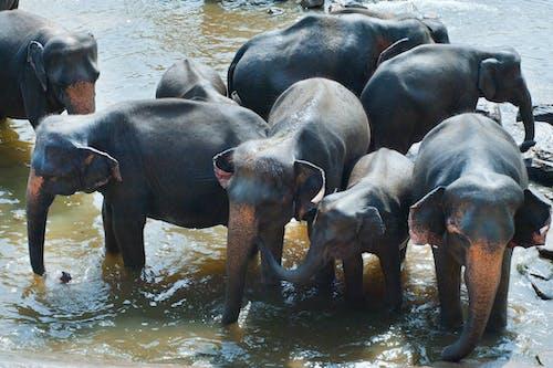 คลังภาพถ่ายฟรี ของ การท่องเที่ยว, ครอบครัว, ความรัก, งาช้าง