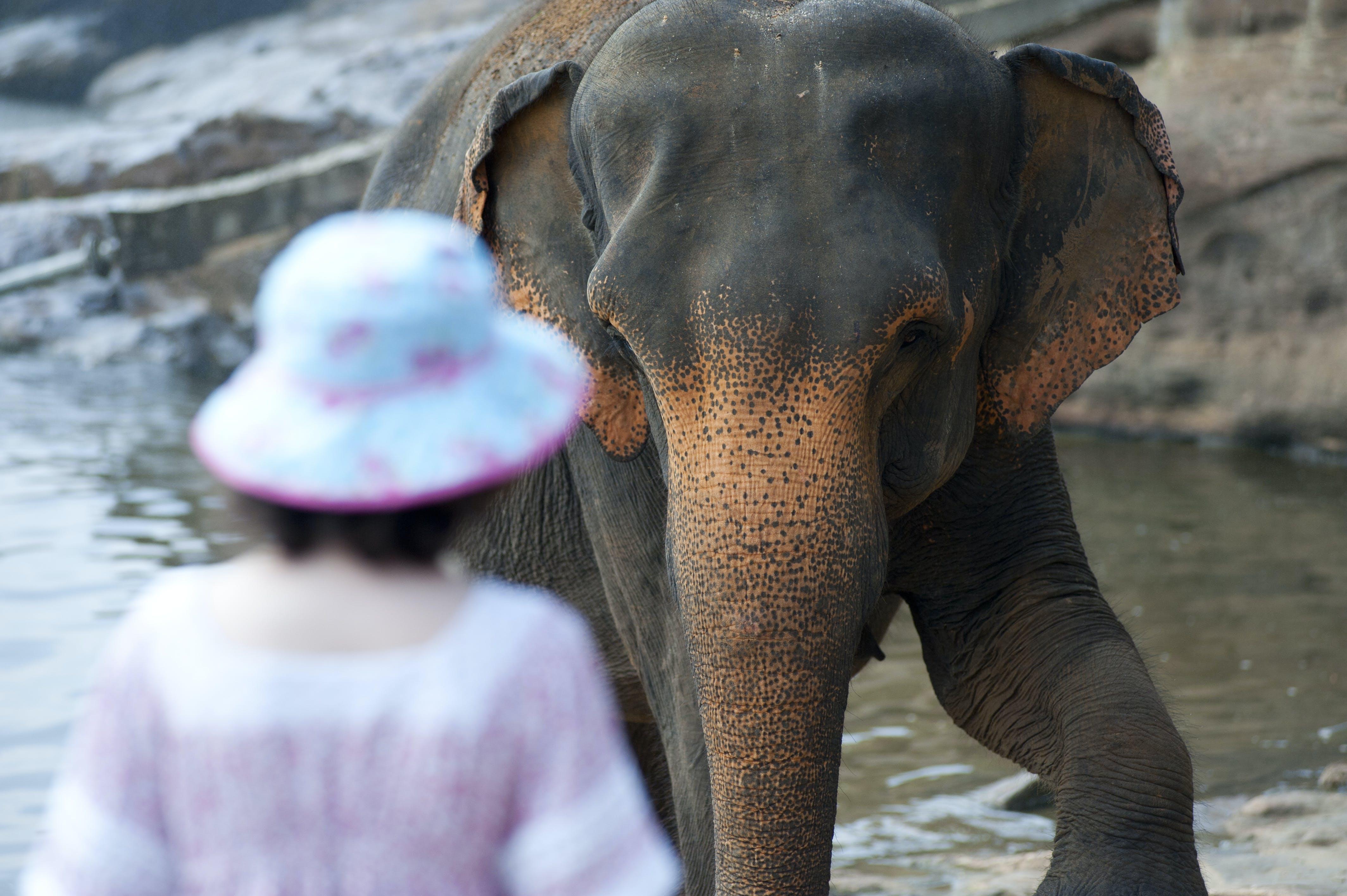 Kostenloses Stock Foto zu baumstamm, elefant, felsen, frau