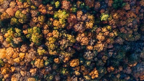 Darmowe zdjęcie z galerii z drzewa, fotografia lotnicza, fotografia z drona, horyzont