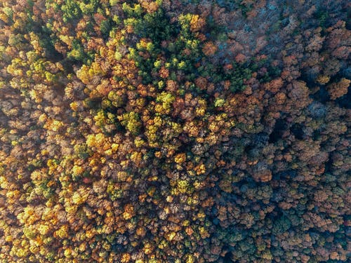 Bird's Eye View of Trees
