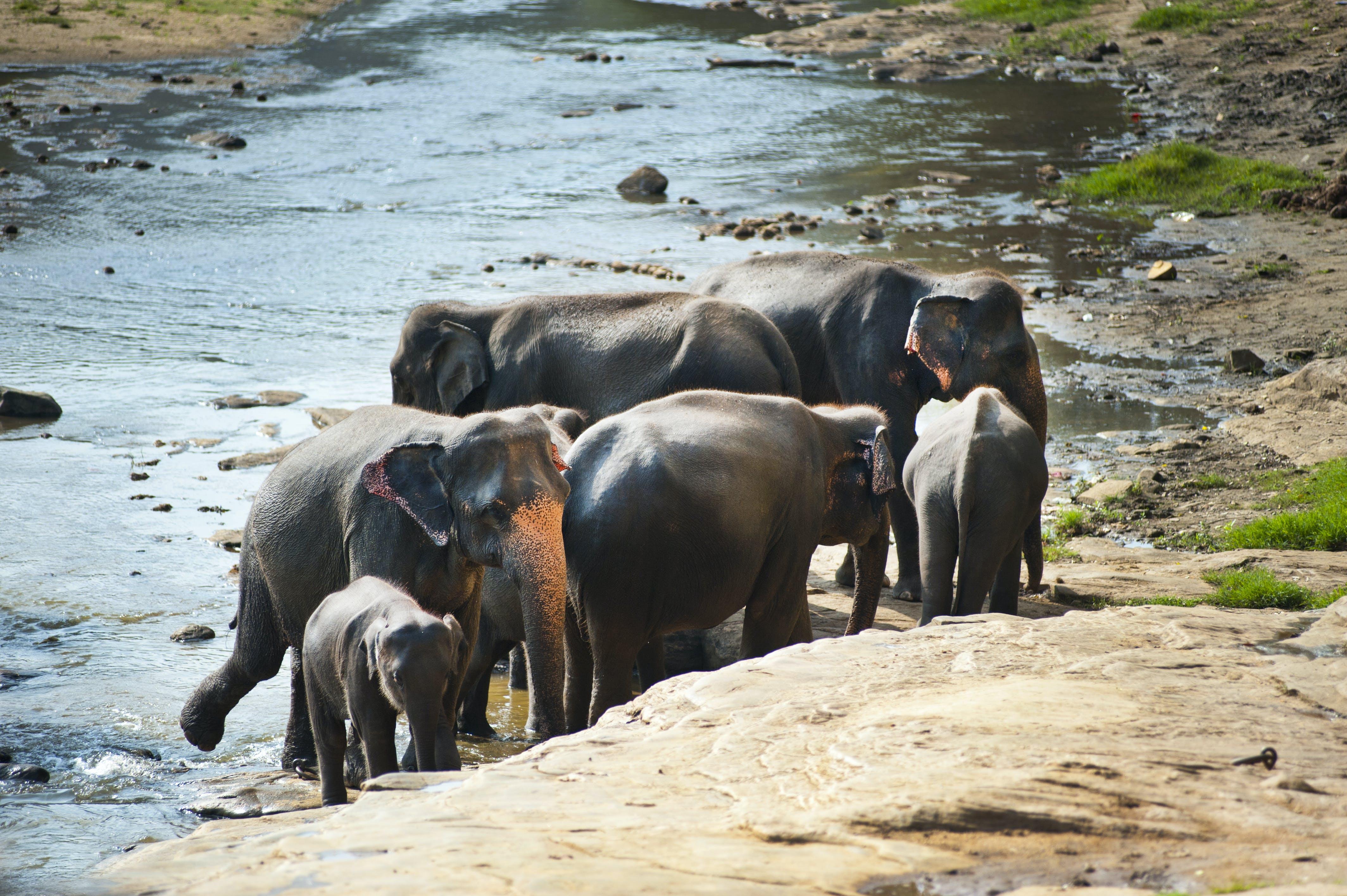 animals, baby, elephants