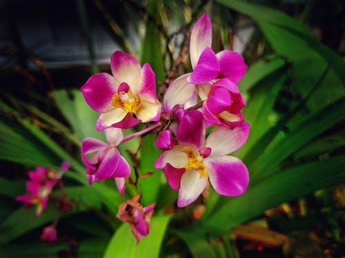 Immagine gratuita di bel fiore, bellezza nella natura, fiori, vita nella natura